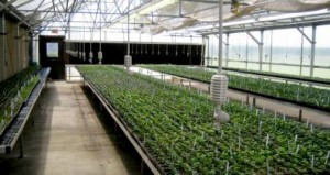 Irrigation_-_Overhead_1-630x334